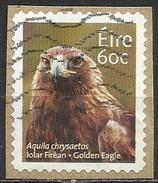 Irlanda 2013 - Golden Eagle (Aquila Chrysaetos) - Animali (Fauna) | Aquile | Uccelli | Uccelli Rapaci (su Frammento) - Usati