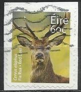 Irlanda 2013 - Red Deer (Cervus Elaphus) - Animali (Fauna) | Cervi | Mammiferi (su Frammento) - Usati
