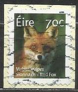 Irlanda 2015: Red Fox (Vulpes Vulpes) - Animali (Fauna) | Mammiferi | Volpi (su Frammento) - Usati