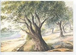 D Lebeau Aquarelle  - Tout Seul, Que Berce L'été... (n°31 Ouranos Vierge) - Autres Illustrateurs