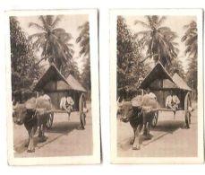 SUMATRA - KOTA INTAN - BULLOCK -CAVANDERS CIGARETTES PEEPS INTO MANY LANDS 1920s - Foto
