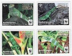 Tonga 2016, WWF, Iguanas, 4val - W.W.F.