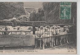EN BEAUCE.MOUTONS AU PARC. - Farmers