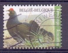 Belgie - 2013 - OBP - 4305 - Korhoen - Vogels - Gestempeld - Oblitérés