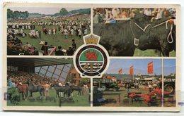 Royal Welsh Agicultural Show - Side Frenhinol, Horses, Bulls, Peu Courante, Petit Format, écrite, BE, Scans... - Breconshire