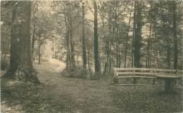 Domaine De MARIEMONT - Le Parc - Chemin Forestier - Morlanwelz
