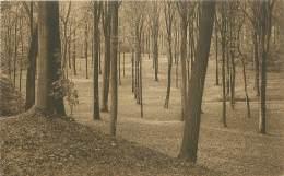 Domaine De MARIEMONT - Le Parc - Sous-Bois - Morlanwelz