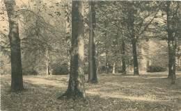 Domaine De MARIEMONT - Le Parc - Sous-Bois Vers L'entrée Principale - Morlanwelz
