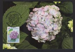 R.O.China/Taiwan (Formosa)- Maximum Card –Hydrangea - 1945-... Repubblica Di Cina