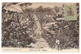 COSTA RICA - HACIENDA DE CAFE - ATIRRO - FOT. PAYNTER BROS - STAMP - 1906 - Postales
