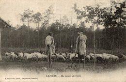 LANDES UN ISNTANT DE REPOS BERGER LANDAIS EN ECHASSE - Ohne Zuordnung