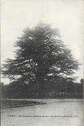 Vitré - Un Des Quatre Cèdres Du Parterre Des Rochers Plantés En 1806 - Arbres