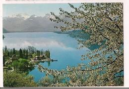 >> 74 -  TALLOIRES : Matin De Printemps Au Petit Lac - 1970 - - Talloires