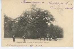 DRAVEIL - CHAMPROSAY - Forêt De SENART - Chêne D'Antin (carte Précurseur) - Draveil