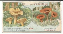 CHOCOLAT D' AIGUEBELLE   -  CHANTERELLE COMESTIBLE     -  FAUSSE GYROLE  -  VENENEUX - Aiguebelle