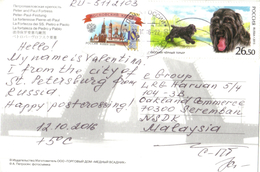 20C: Russia Dog Stamp On St Petersburg Postcard
