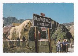 65 Les Hautes Pyrénnées N°219 Chien De Montagne Au Col Du Tourmalet En 1967 Clichés ALPY Tarbes - France