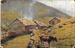 [DC3702] CPA - MUCCA AL PASCOLO - Non Viaggiata - Old Postcard - Mucche