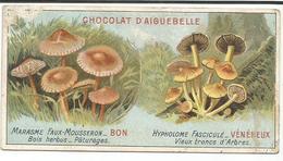 CHOCOLAT  D' AIGEBELLE  -   FAUX MOUSSERON   BON  -  HYPHOLOME FASCICULE  -  VENENEUX - Aiguebelle