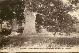 -ref-P203 - Yvelines - Neauphle Le Chateau - Vieux Chene A La Mare Aux Coulombs - Chenes - Arbre - Arbres - - Neauphle Le Chateau