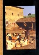VILLECHENEVE 69770 MONTROTTIER : Les Poules Dans La Basse Cour Fermière Poule Poulet 1983 / Chicken Farm - Altri Comuni