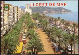 Spain Lloret De Mar 1991 / Beach, Palms - Gerona