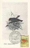 D28116 CARTE MAXIMUM CARD TRIPLE 1963 MALAGASY - FOUDIA CP ORIGINAL - Sperlingsvögel & Singvögel