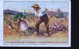 LA POTASSE ALSACE - Cultures