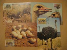 AUTRUCHE OSTRICH Yvert 523/6 OSTRICHES CAMLUS AUSTRALIS Maltahohe 1985 4 Maxi Maximum Card SWA