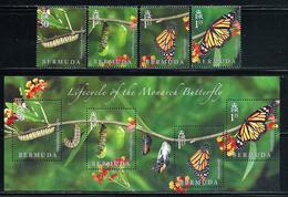 """Bermuda   """"Butterflies""""   New Issue   October- 20-2016   Set & Souvenir Sheet  MNH - Bermuda"""