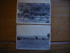 CONGO --- BUGUGU (River Rutshuru ) Et Vitshumbi : Parc National Albert --- Eléphant Hippopotame Antilopes - 1948 - Éléphants