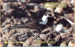 Ascension - 3CASD, GPT, Wideawake Tern, 4600ex, 1992, Used