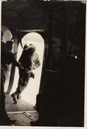 Photo Para Commando Belge à L'exercice Parachute Parachutisme Avion - Guerre, Militaire