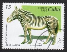 Zebra Stamp - Game