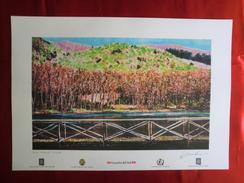 Foto Litografia GAMBARIE D'ASPROMONTE, IL LAGHETTO Di Nello Cuzzola - PERFETTA - Litografia