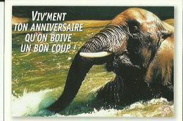 Carte  Neuve  D'Elephant  ( Viv'ment Ton Anniversaire Qu'on Boive Un Bon Coup ) - Elephants