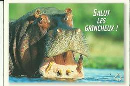 Carte  Neuve  De  Rhinoceros ( Salut Les Grincheux ! ) - Rhinoceros