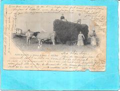 PAYS BASQUE - CPA DOS SIMPLE De Novembre 1899 - Attelage De Boeufs - Carte Très Abimée - ENCH1612 - - France