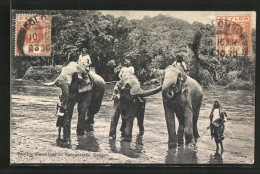 CPA Katugastota, Temple Elephants, Tempelelefanten - Elephants