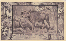 African Buffalo , 00-10s - Other