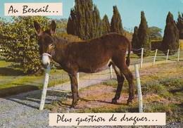 AU BERCAIL PLUS QUESTION DE DRAGUER - ANE - Humour