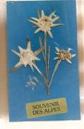 Souvenir Des Alpes - Plante Fleur Edelweiss Séché - B. Flower Plants & Flowers