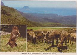 Ile Maurice,océan Indien,MAURITIUS,FORET DE LA RIVIERE NOIRE,ANIMAL - Maurice