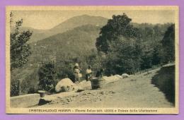 Castelnuovo Nigra - Monte Calvo E Chiesa Della Visitazione - Other