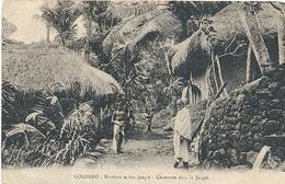 Ceylon, Colombo, Hunters In The Jungle (Sri Lanka)  (Ceylan) - Sri Lanka (Ceylon)