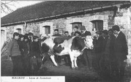 CARTE POSTALE ANCIENNE DE MALROY  -  LECON DE ZOOTECHNIE - Autres Communes