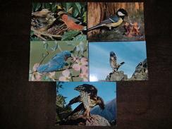 39 Cartes Postales D'oiseaux Année 60-70 Neuves Toutes Différentes Sans Bordures Blanches - Postcards