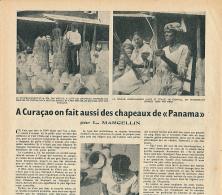 """1951 : Document, CURACAO, ANTILLES (2 Pages Illustrées) Chapeaux De """"Panama"""", Feuilles De Cardulovica, Ouvrières... - Non Classés"""