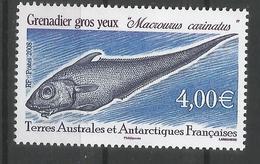 TAAF ANTARTCTIC ANTARTIDA POLO SUR PEZ FISH GRENADIER GROS YEUX - Antarctic Wildlife