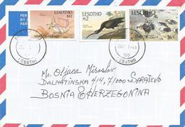 Lesotho 2002 Maseru Massospondylus Prehistory Audubon Ibis Bird Moonlander Space Cover - Lesotho (1966-...)